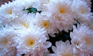 Цветы для похорон бабушки.
